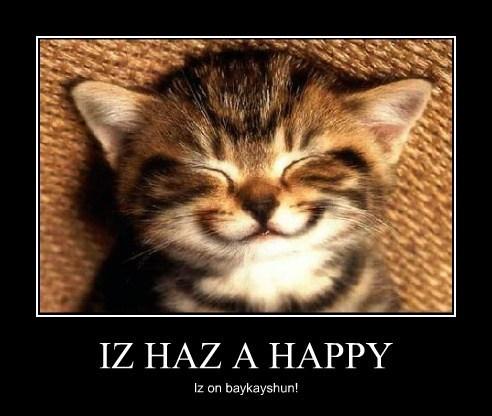 happy vacation cat teacher