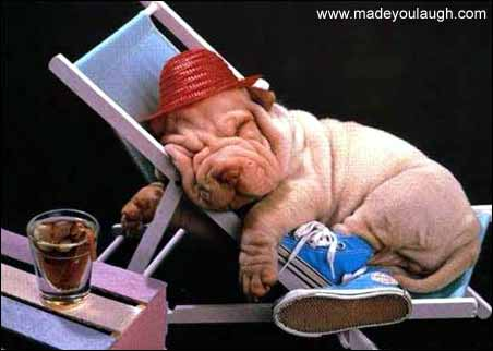 teacher dog vacation